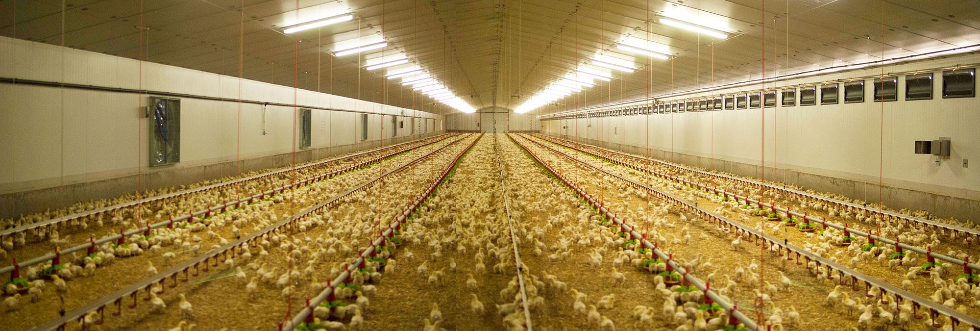 Esguín - Obras ganaderas, avícola